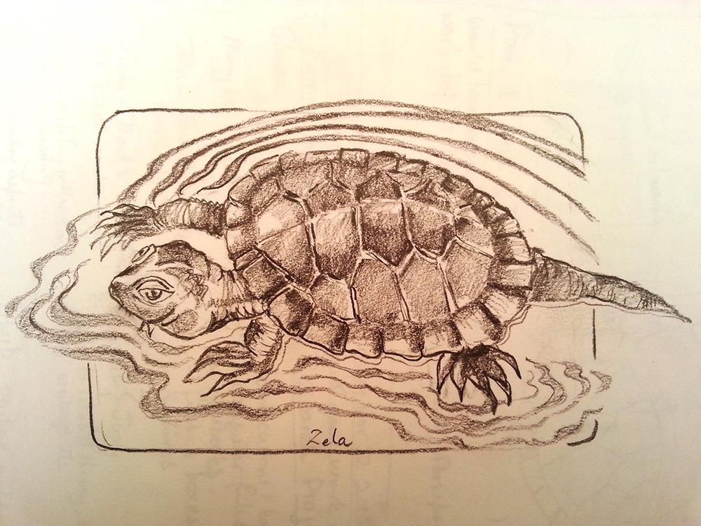 zela-bissett-turtle